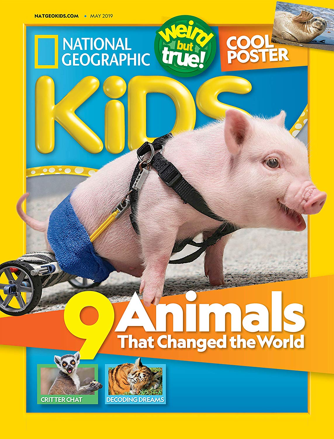 National Geographic Kids 杂志 ( 6岁以上 ) $389